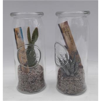 SUCCULENTE D07 P x12 Message in a bottle