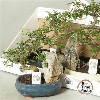 ENGRAIS PLANTES BALCONNIERES LE SACHET DE 500GR